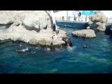 Океанариум в Валенсии (Испания)