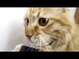 Кот целуется с пылесосом )